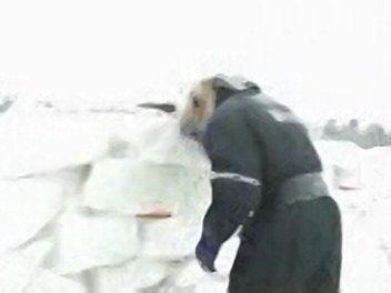 Bjorn Make Wall!
